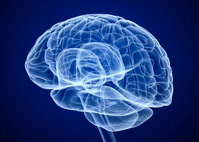 Our Brain Can Rewire Itself Following A Traumatic Bodily Injury Study