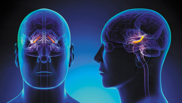 Study Found Brain Disorders Increased Aging Of The Brain