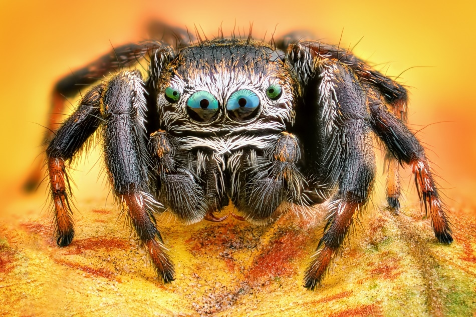 Tiny Depth Sensor Developed By Researchers Motivated By Spider Eyes