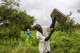 Plague of locusts threatens East African economies as UN sounds alarm